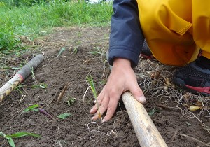 Child's hand planting a plan in a graen