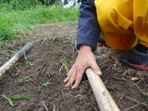child planting a garden at Guelph Outdoor Preschool